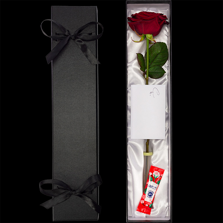 Single Luxury Rose