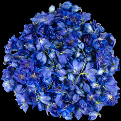 Click here to visit InterPetal the Freeze Dried Floral Specialists