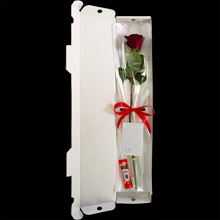 Single Letterbox Rose