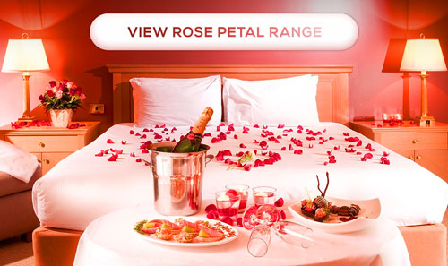 Fresh rose petals sprinkled on bed