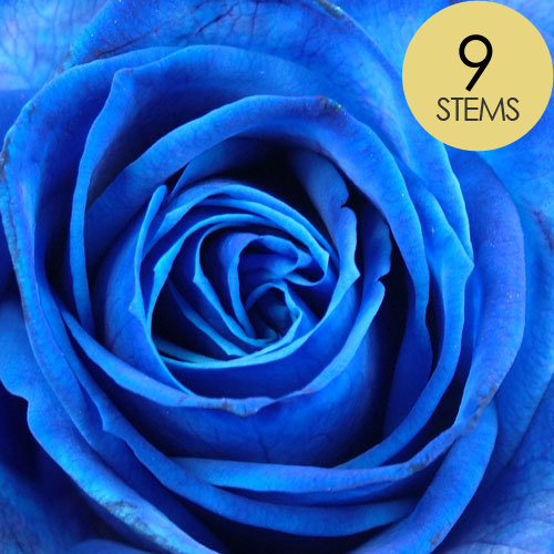 9 Blue Roses