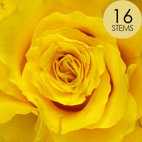 16 Yellow Roses