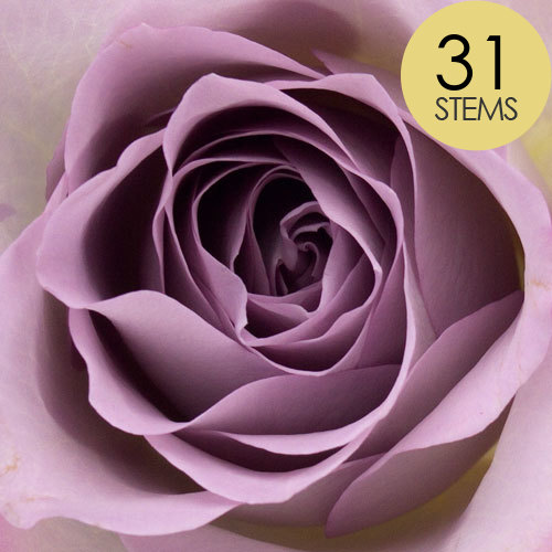 31 Lilac Roses