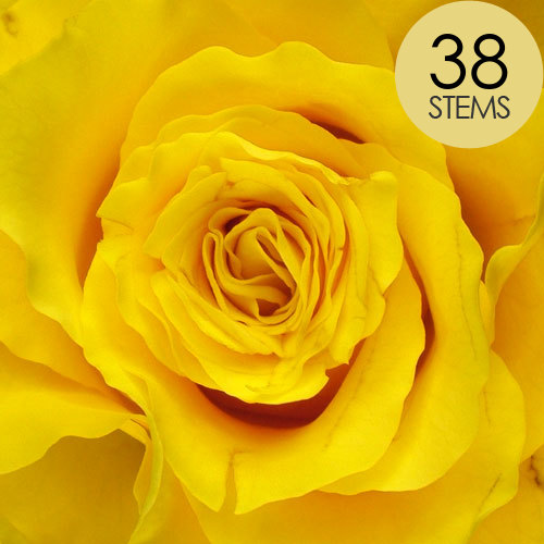 38 Yellow Roses