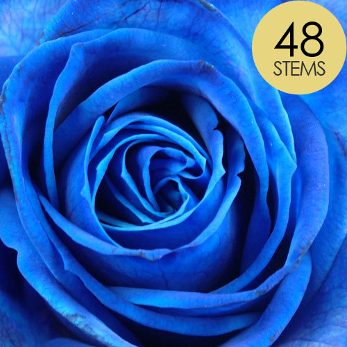 48 Blue Roses