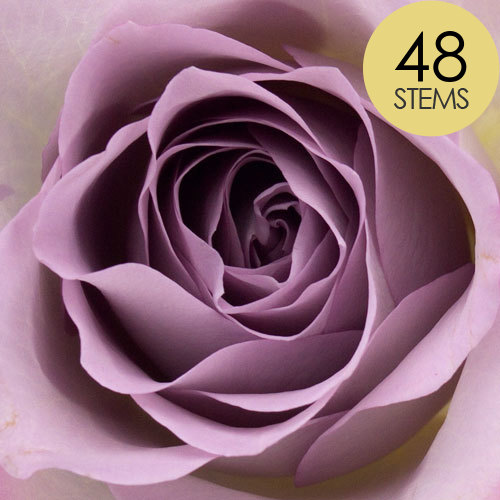 48 Lilac Roses