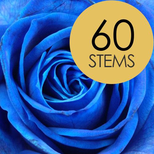 send five dozen blue roses buy five dozen blue roses