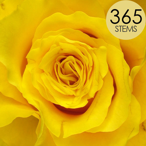 365 Yellow Roses