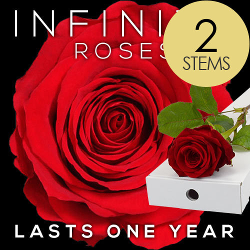 2 INFINITY Letterbox RED Roses