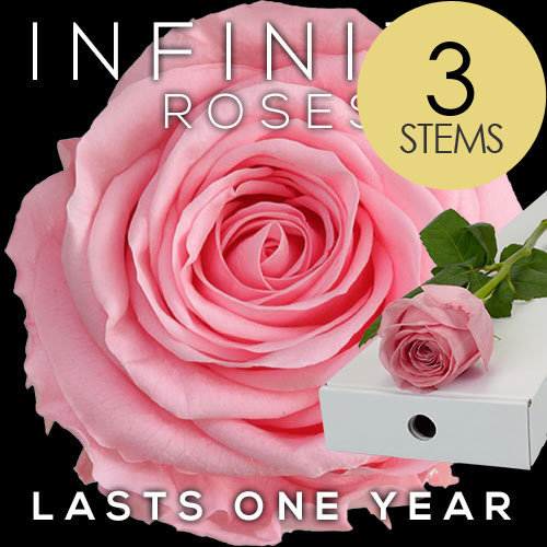 3 INFINITY Letterbox PINK Roses