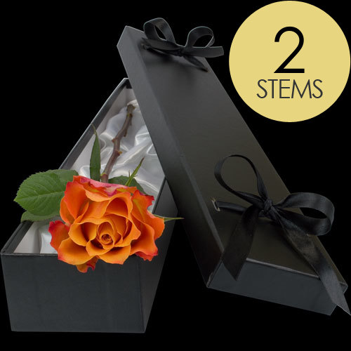 2 Luxury Orange Roses