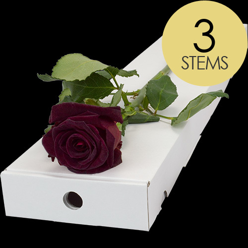 3 Letterbox Black Baccara Roses