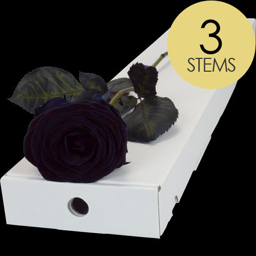 3 Letterbox Black (Dyed) Roses