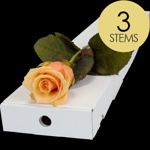 3 Letterbox Peach Roses