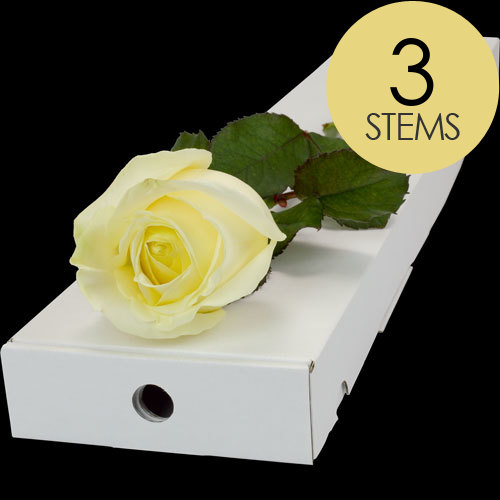 3 WHITE Roses in a Luxury Silk Lined Gift Box