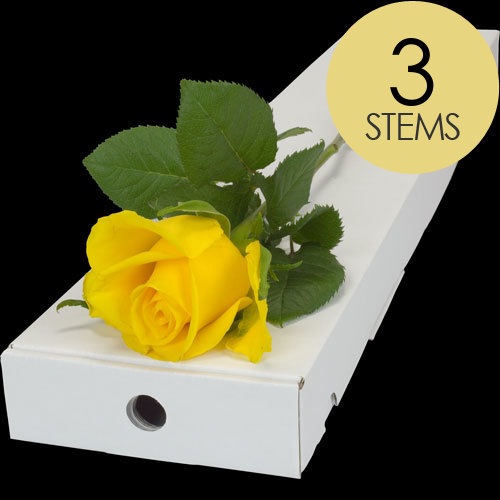 3 Classic Yellow Roses
