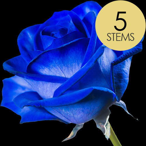 5 Blue (Dyed) Roses