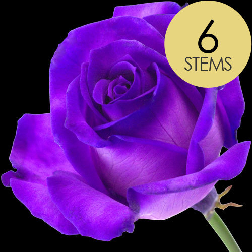 6 Luxury Purple Roses