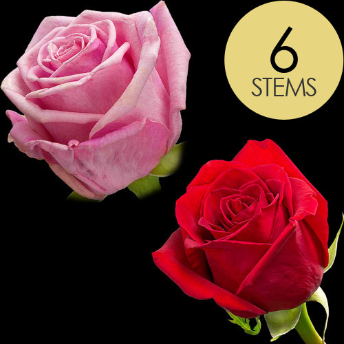 6 Classic Red and Pink Roses