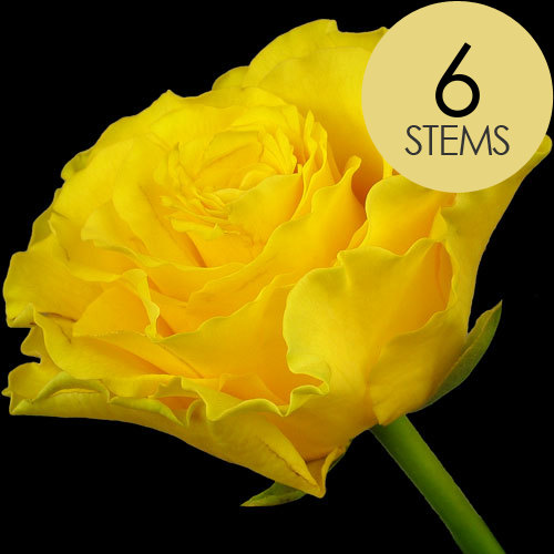 6 Luxury Yellow Roses