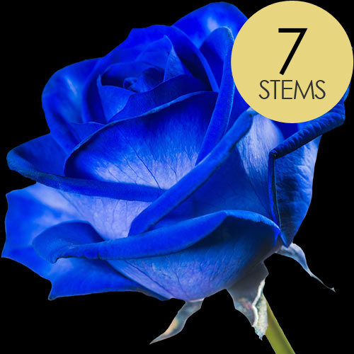 7 Blue (Dyed) Roses