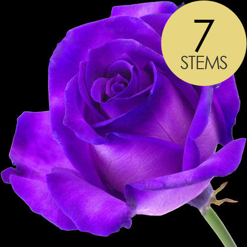 7 Luxury Purple Roses