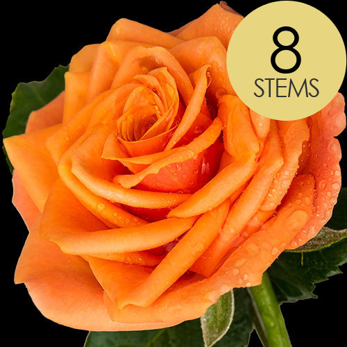 8 Luxury Orange Roses