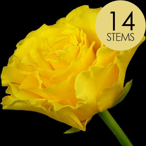14 Yellow Roses