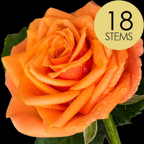 18 Luxury Orange Roses