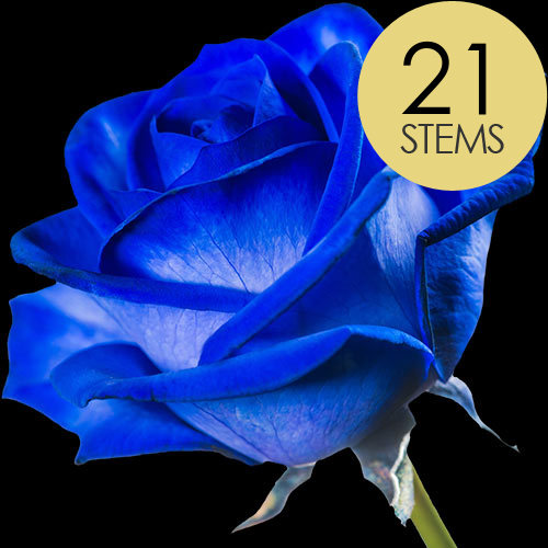 21 Blue (Dyed) Roses