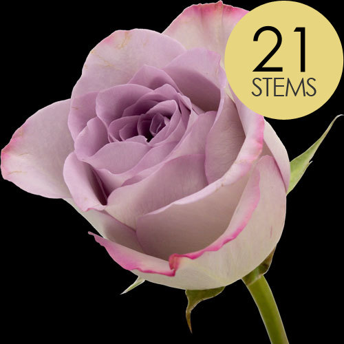 21 Classic Lilac Roses