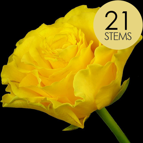 21 Yellow Roses