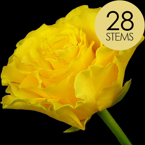 28 Yellow Roses