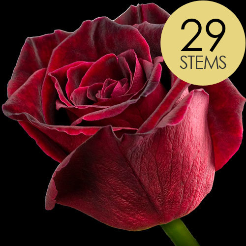 Click to view product details and reviews for 29 Black Baccara Roses.