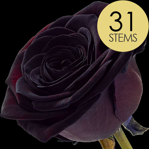 31 Luxury Black Roses