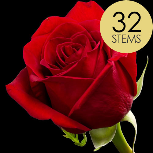 32 Classic Bright Red Freedom Roses