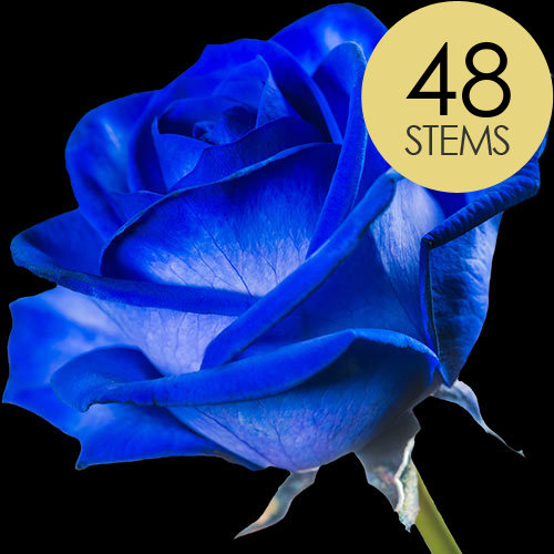 48 Blue (Dyed) Roses
