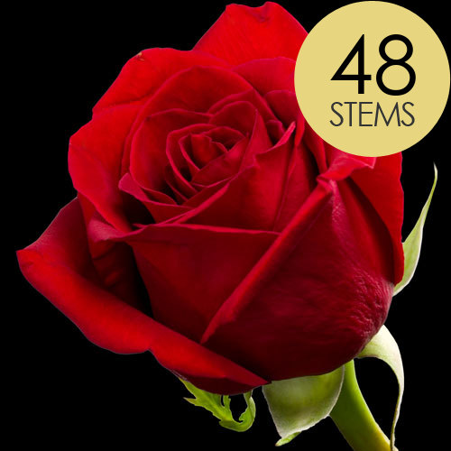 48 Classic Bright Red Freedom Roses