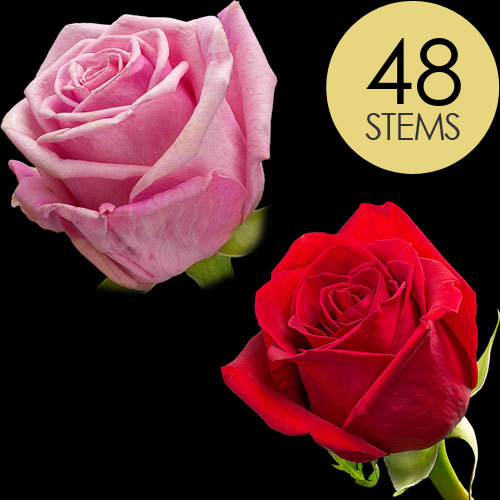 48 Red and Pink Roses