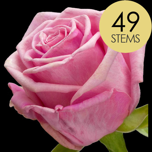 49 Classic Pink Roses