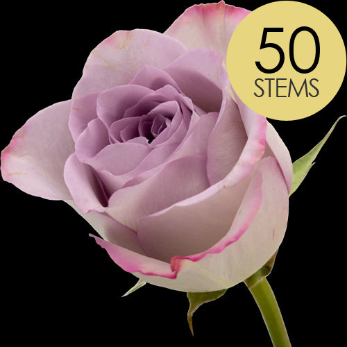 50 Luxury Lilac Roses
