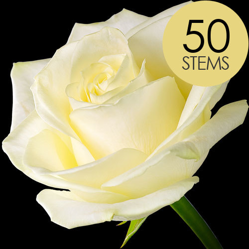 50 Luxury White Roses