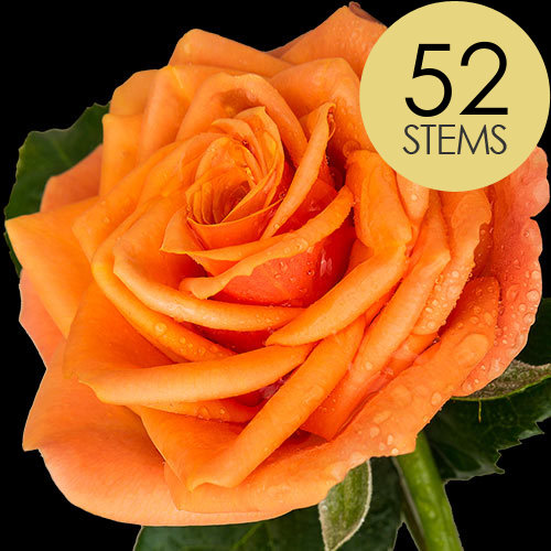 52 Luxury Orange Roses