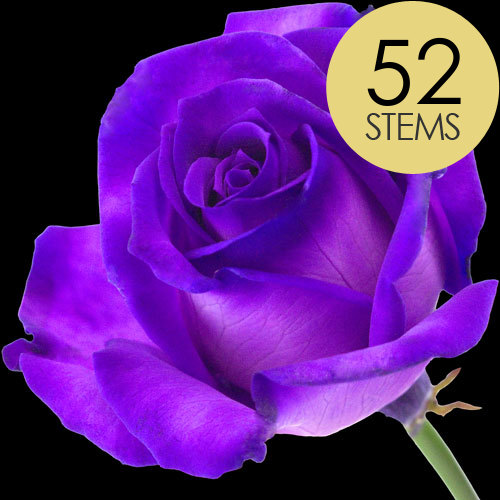 52 Luxury Purple Roses
