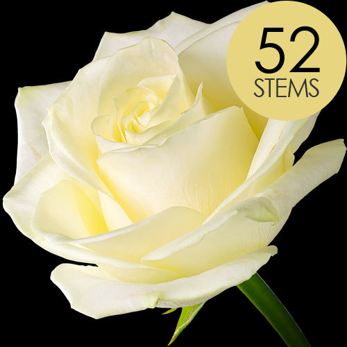 52 Luxury White Roses