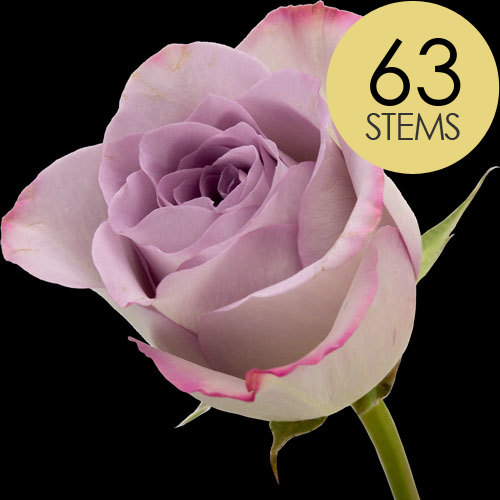 63 Classic Lilac Roses