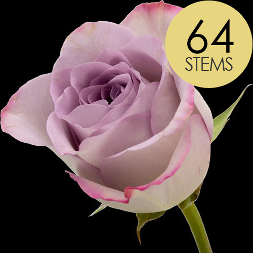 64 Classic Lilac Roses