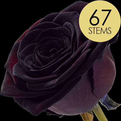 67 Luxury Black Roses