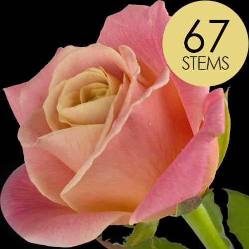 67 Luxury Peach Roses