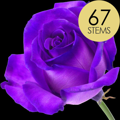 67 Luxury Purple Roses